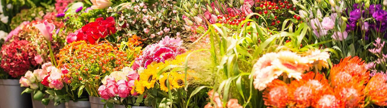 Fleurop bloemenwinkel breda bloemen francois van gurp for Bloemist breda